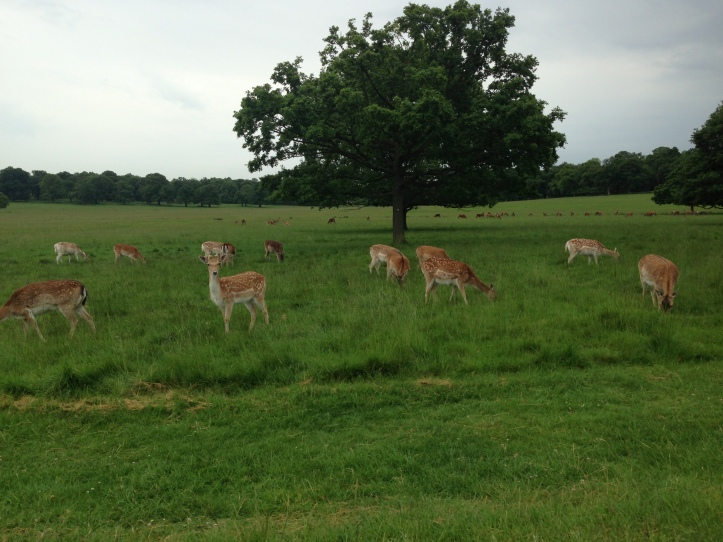 Richmond Park ve Geyikler